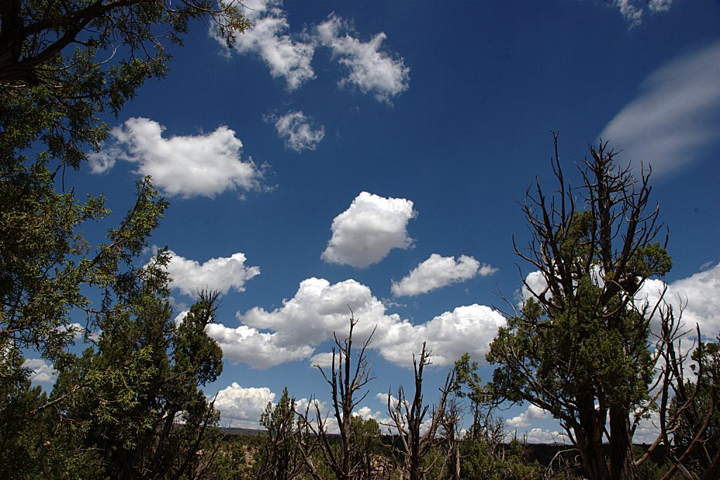 Piñon Pine and Sky